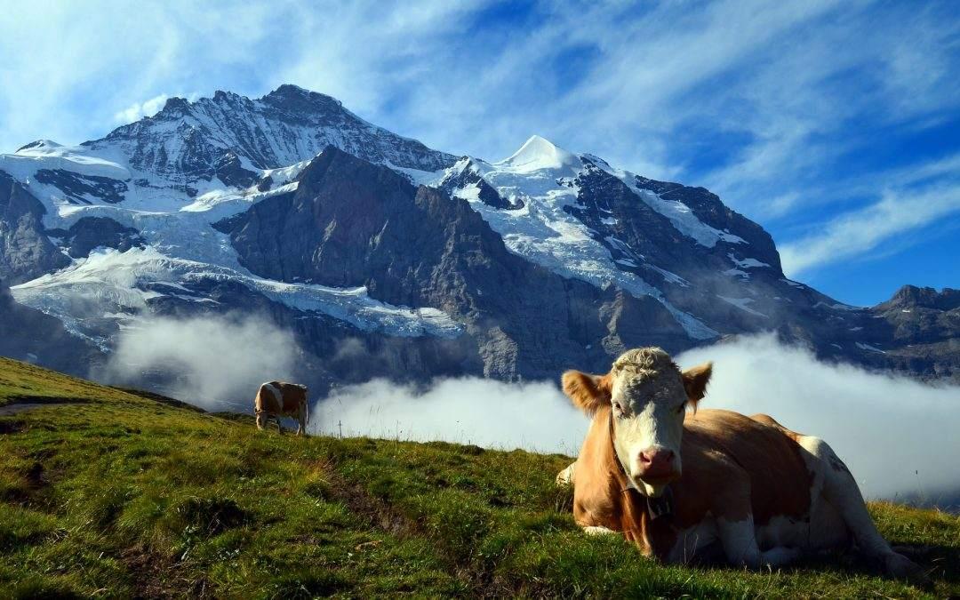 Cash-Cows der Börsen